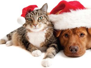 Cute-Holiday-Cat-and-Dog